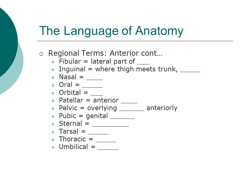 "the language of anatomy In her talk—titled ""how do human brains give rise to language""—berent argued  that human language is a product of a specialized biological."