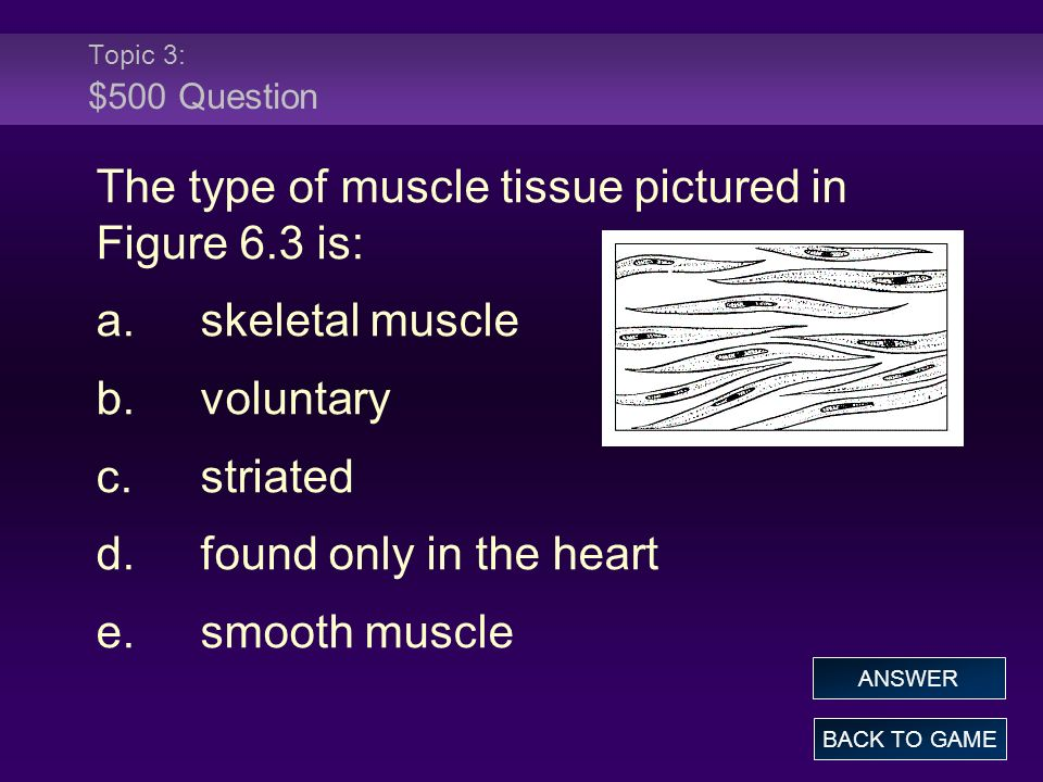 The type of muscle tissue pictured in Figure 6.3 is: