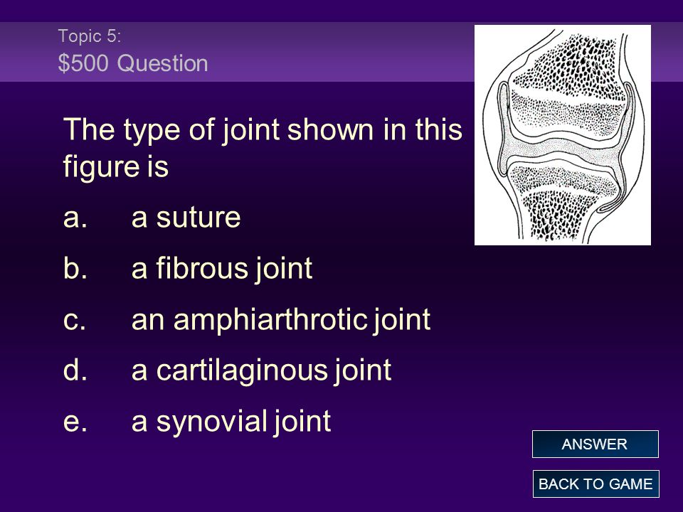 The type of joint shown in this figure is a. a suture