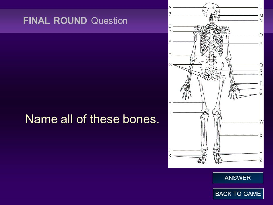 FINAL ROUND Question Name all of these bones. ANSWER BACK TO GAME