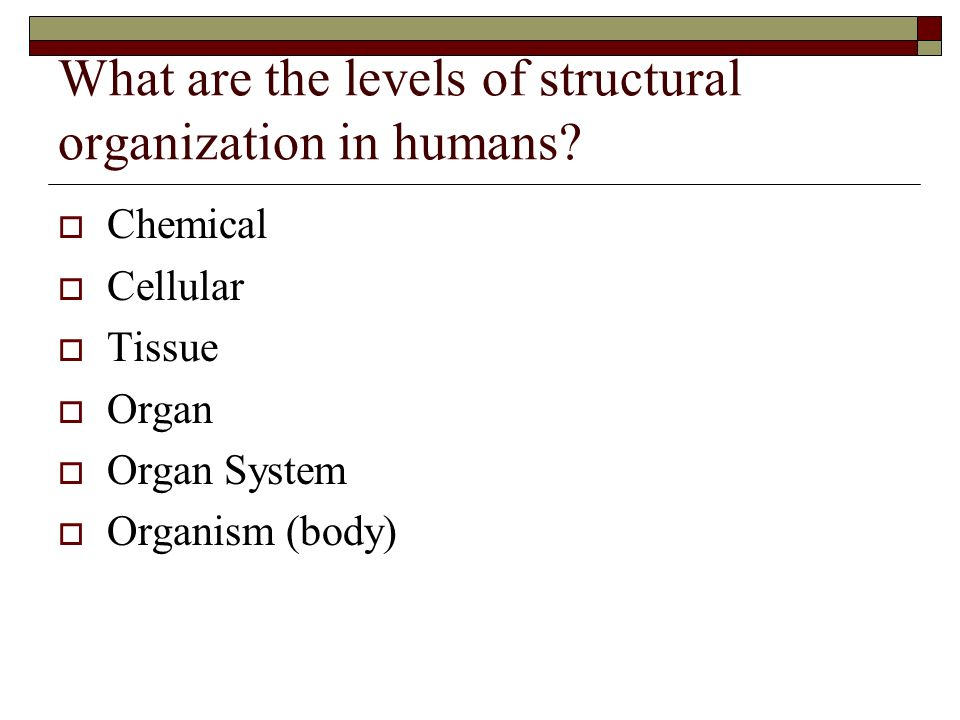 What are the levels of structural organization in humans