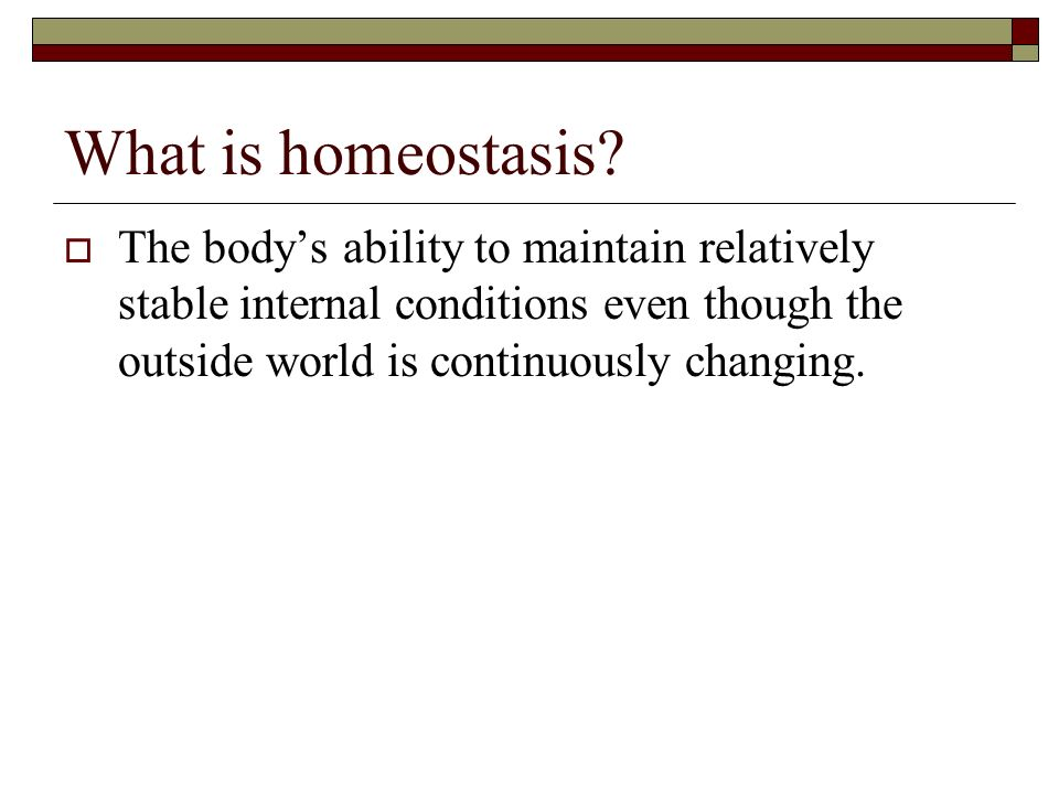 What is homeostasis.