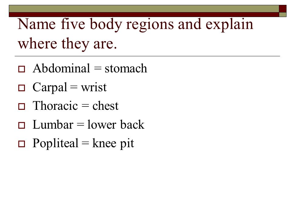 Name five body regions and explain where they are.