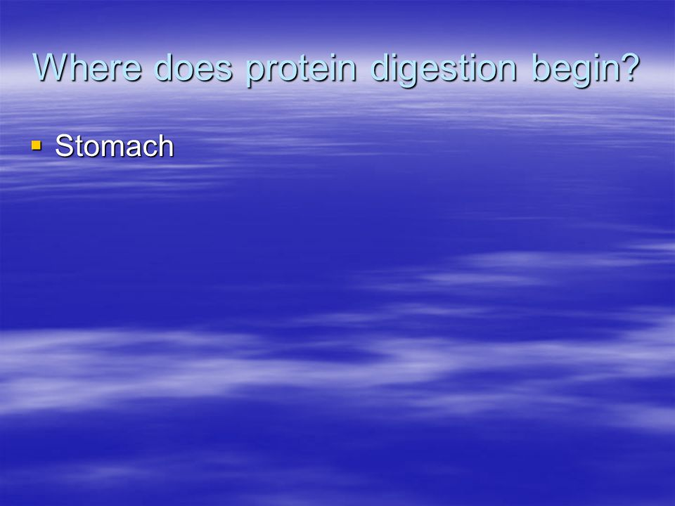 Where does protein digestion begin