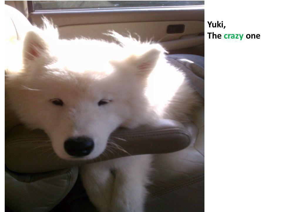 Yuki, The crazy one