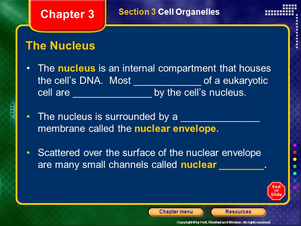 Chapter 3 Section 3 Cell Organelles. The Nucleus.