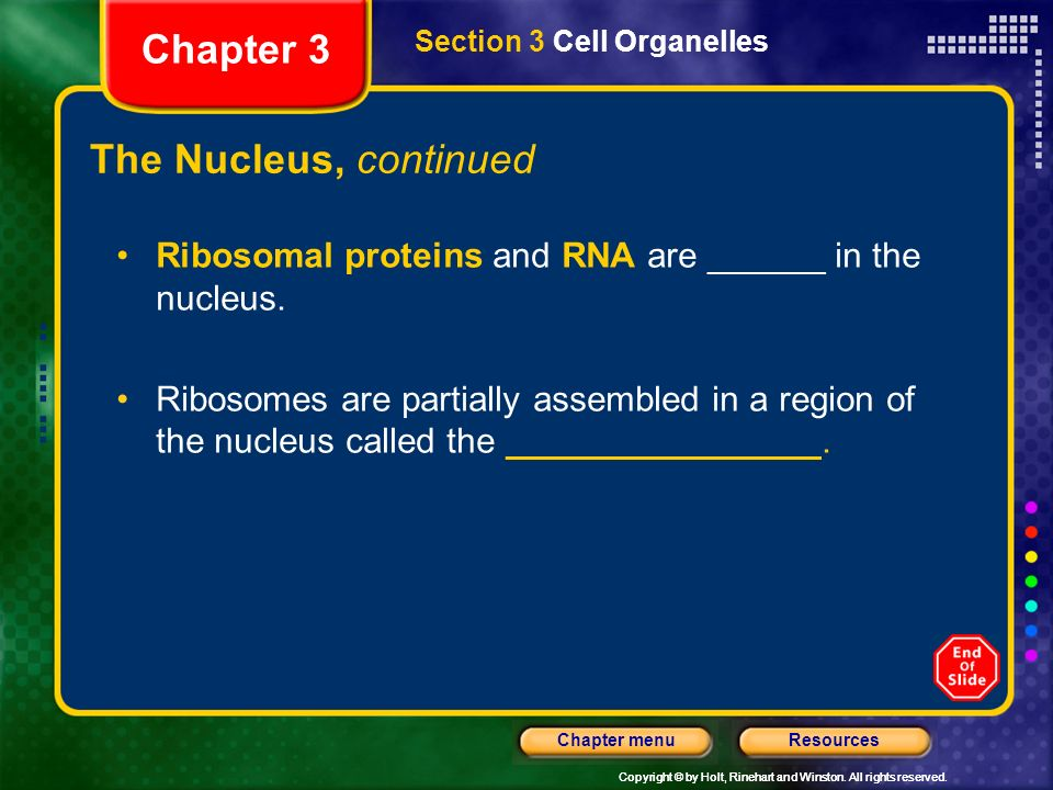 Chapter 3 The Nucleus, continued