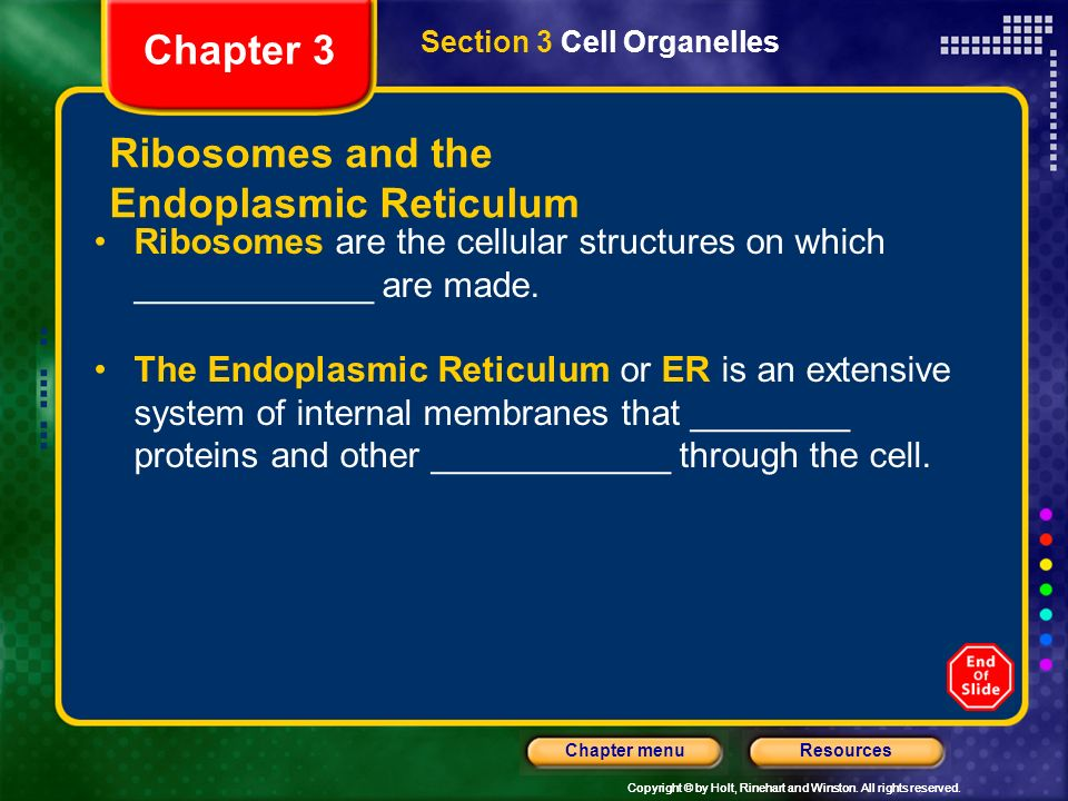 Ribosomes and the Endoplasmic Reticulum