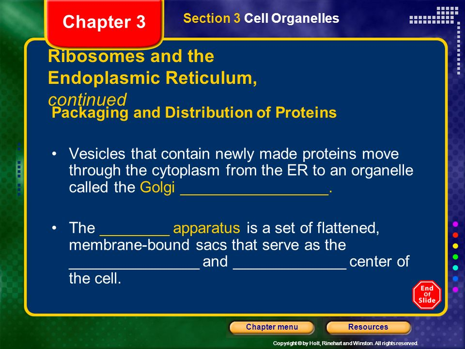 Ribosomes and the Endoplasmic Reticulum, continued