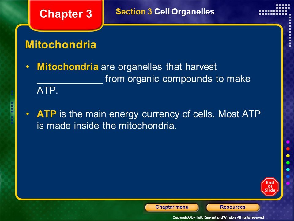 Chapter 3 Section 3 Cell Organelles. Mitochondria. Mitochondria are organelles that harvest ____________ from organic compounds to make ATP.