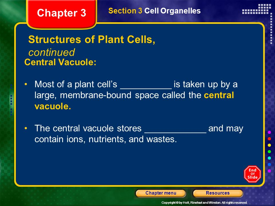 Structures of Plant Cells, continued