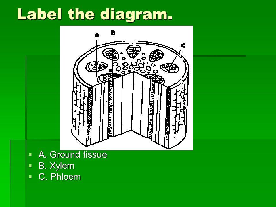 Label the diagram. A. Ground tissue B. Xylem C. Phloem