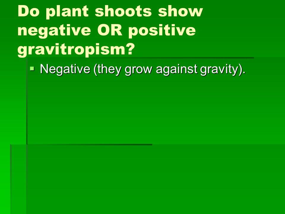 Do plant shoots show negative OR positive gravitropism