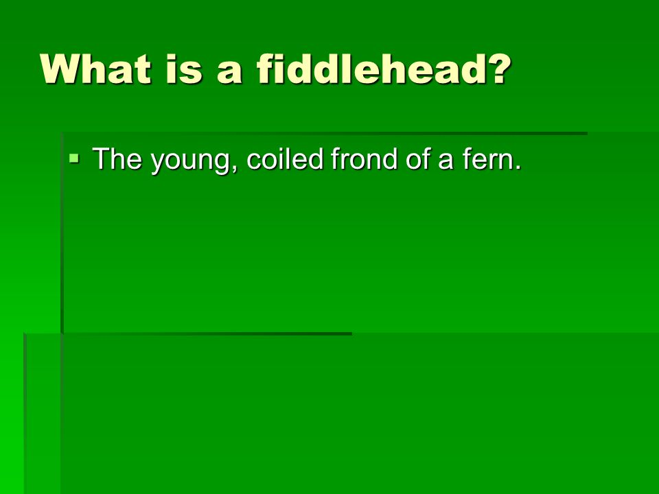 What is a fiddlehead The young, coiled frond of a fern.