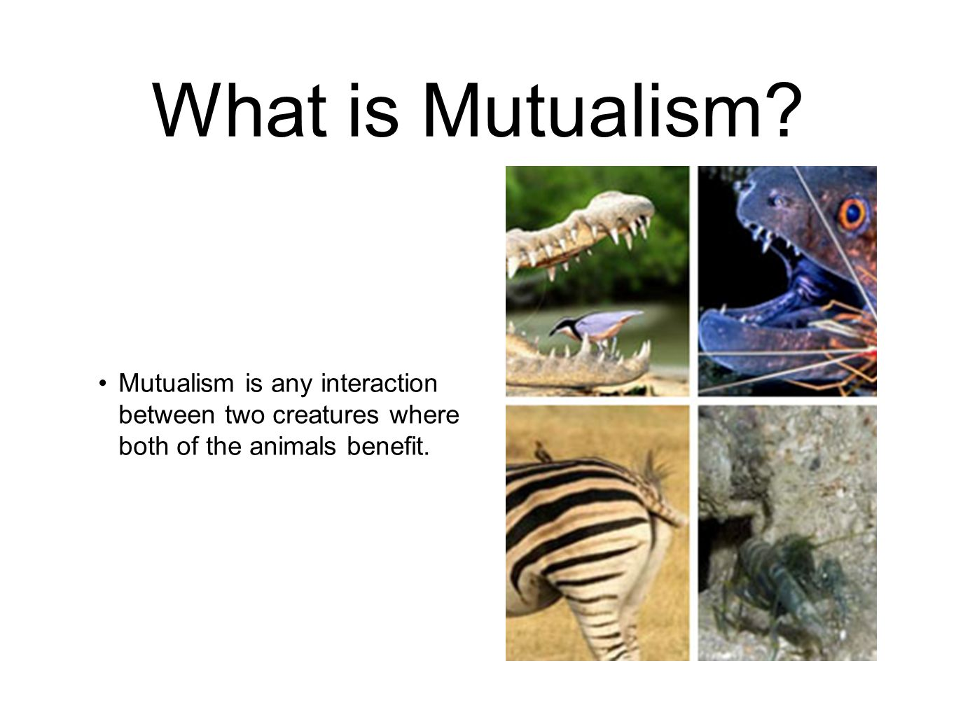 the idea of mutualism between animals Commensalism and mutualism among plants and animals   typically,  symbiosis is thought of as interactions that impart no negative effect to either  symbiont.