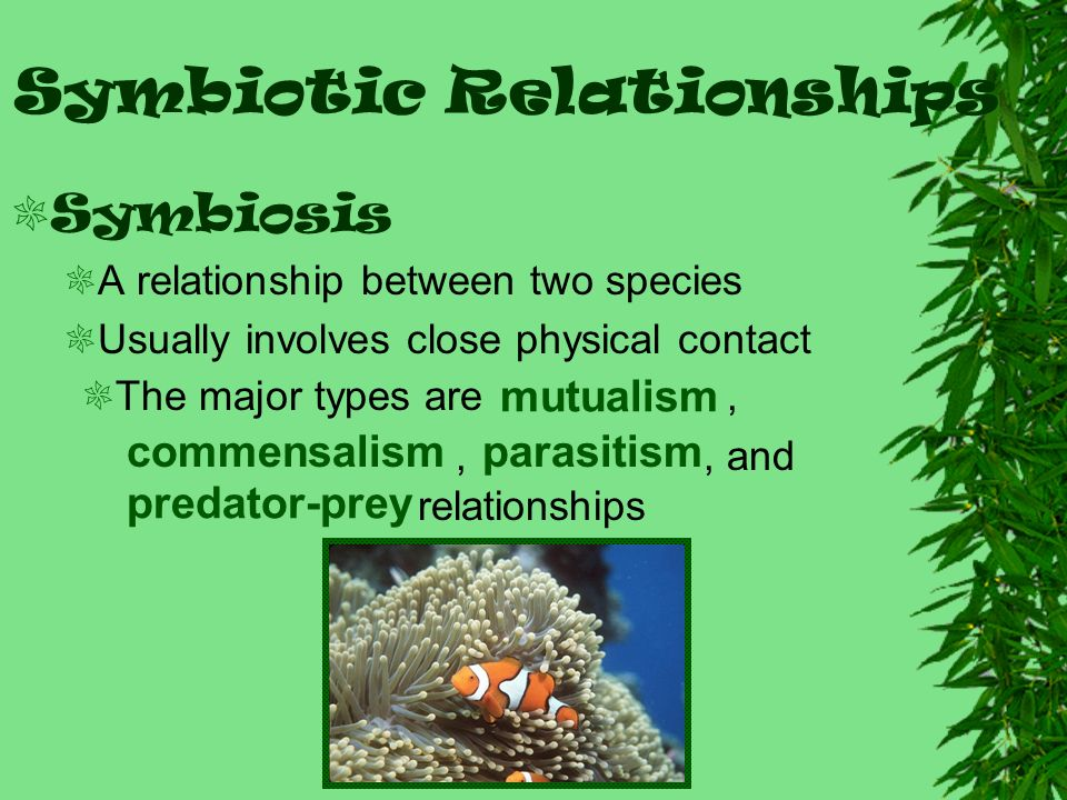 ecological relationships Ecological relationships biological magnification — increasing concentration of poisons in organisms in higher trophic levels in a food chain or web.