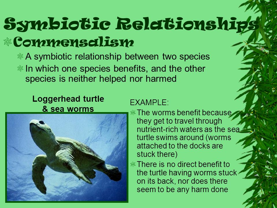 commensalism | Definition, Examples, & Facts | angelfirenm