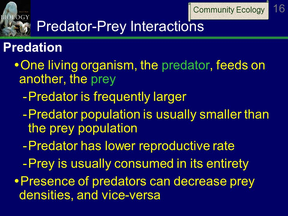 predator and prey interaction Evaluate your knowledge regarding the interactions of predators and their prey, along with the effects of camouflage, mimicry and warning.