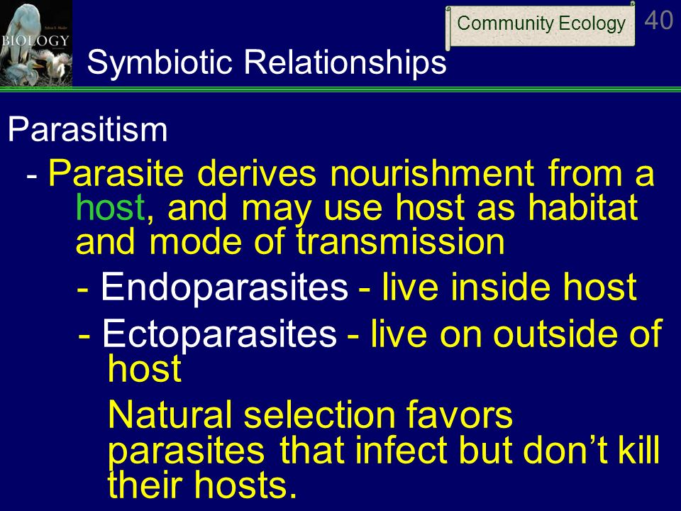 human and tapeworm symbiotic relationship