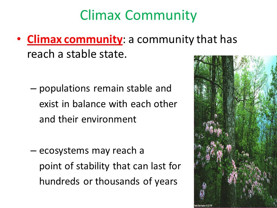 climax community 1 it is the first biotic community which develops in bare area 2 pioneer community is established over a previously bare area 3 pioneer community consists of a fewer small sized organisms 4 the area is hostile for pioneer community 5 it develops soil 6 the community consists of hardy .