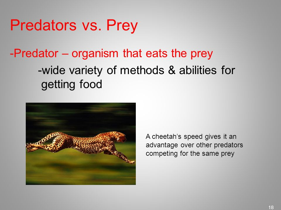 Predators vs. Prey -Predator – organism that eats the prey -wide variety of methods & abilities for getting food