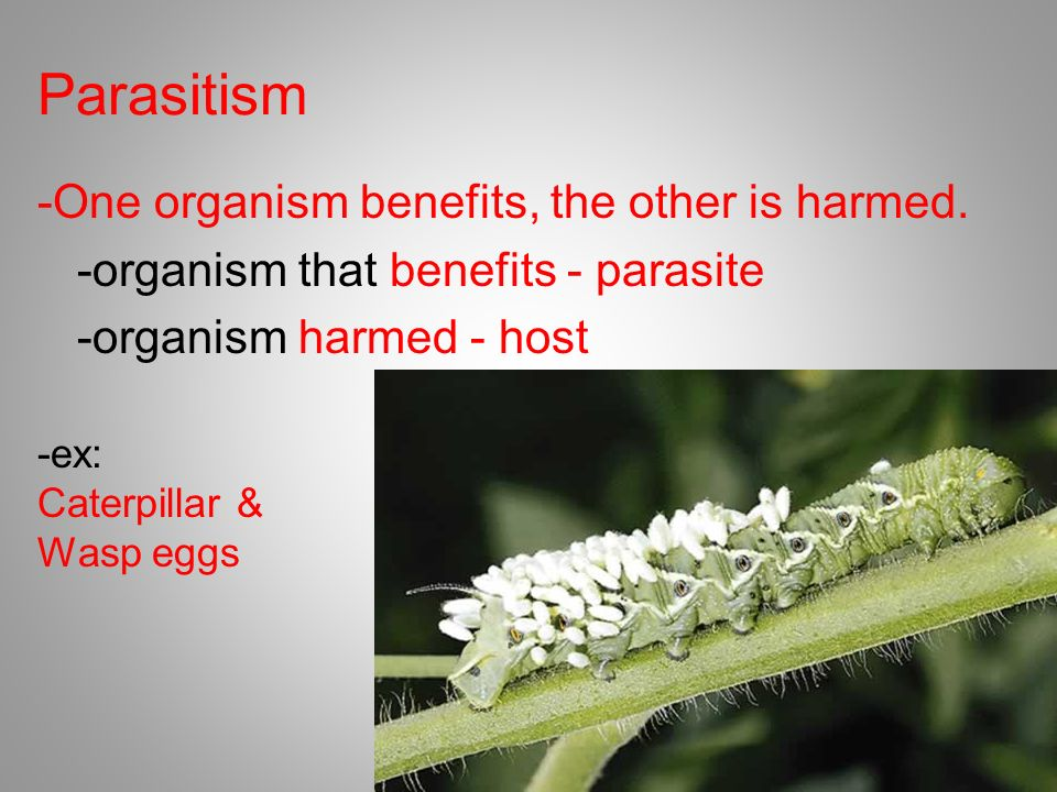Parasitism -One organism benefits, the other is harmed. -organism that benefits - parasite -organism harmed - host
