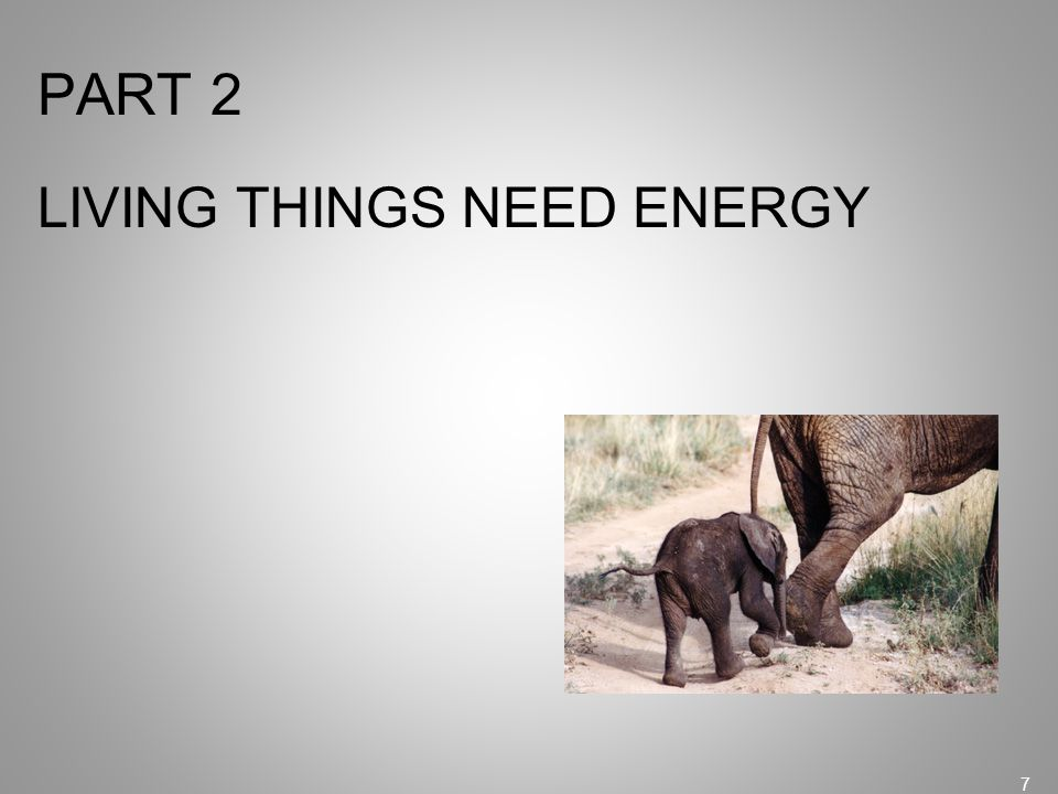 PART 2 LIVING THINGS NEED ENERGY