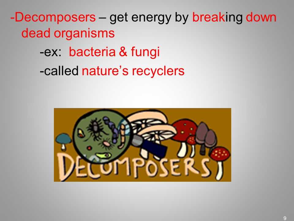-Decomposers – get energy by breaking down dead organisms -ex: bacteria & fungi -called nature's recyclers