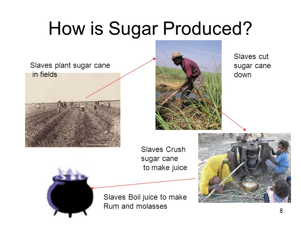 How is Sugar Produced Slaves cut sugar cane Slaves plant sugar cane
