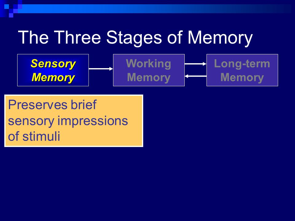 an explanation of the 3 stages of memory Our sensory memory is stored for between a quarter of a second and three or four seconds short-term memory short-term memory (stm) storage is estimated to last anywhere between 20 and 30 seconds if the new information is not rehearsed.