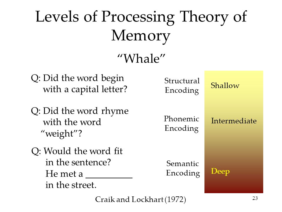 a look into the concept and theory of word processing During top-down processing of a word consisting of discovery followed by a lesson and concept helps in metacognition in educational theory and.