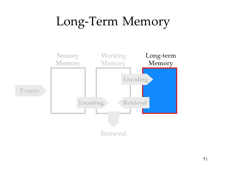 an analysis of the coding of short term and long term memory With the development of the interpretation theory, the studies on interpreting have become extremely important in view of the importance of memory in interpretation, many scholars concentrate on short-term memory research, while ignoring the important role of long-term memory in interpretation study and.