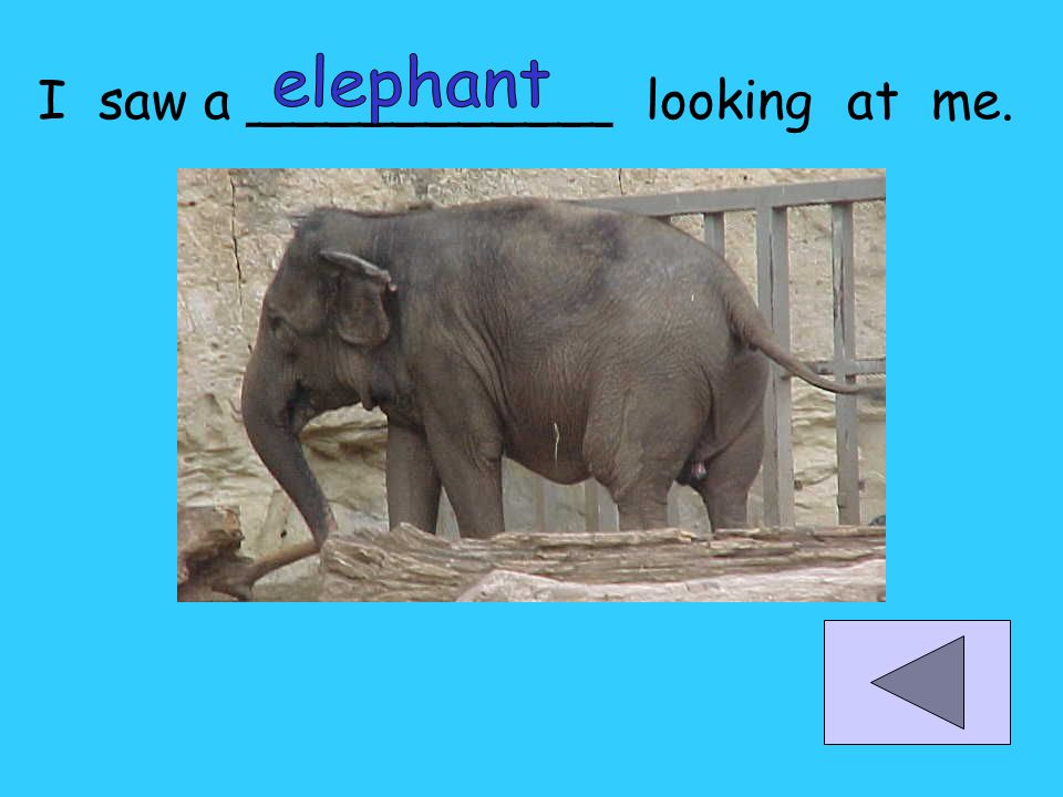 elephant I saw a ___________ looking at me.