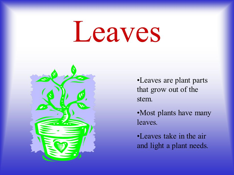 Leaves Leaves are plant parts that grow out of the stem.
