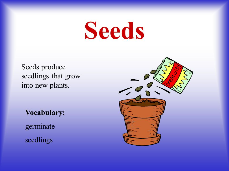 Seeds Seeds produce seedlings that grow into new plants. Vocabulary:
