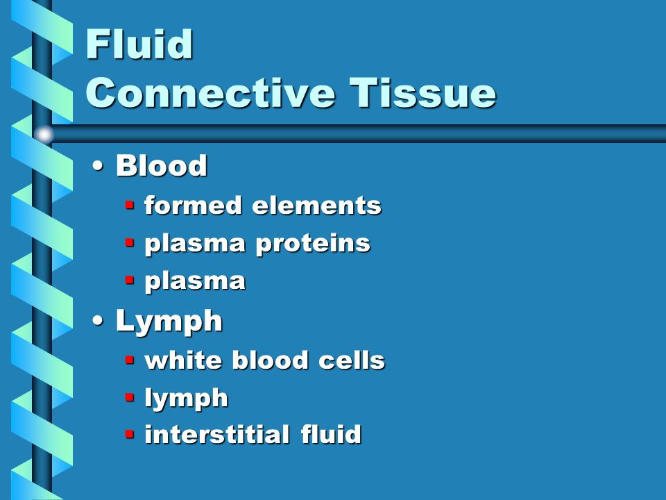 fluid connective tissue Connective tissue, supporting connective tissue, connective tissue proper,  fluid connective tissue.