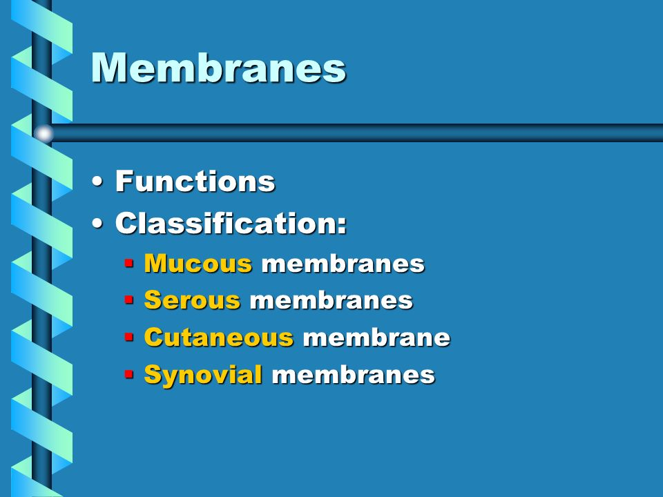 Tissues 20with 20figures moreover Intro To Anatomy Powerpoint Presentation further Biol 121 Chp 20 The Cardiovascular System The Heart additionally Diagram Of Abdominal Cavity additionally 6232299. on ventral body cavity membranes