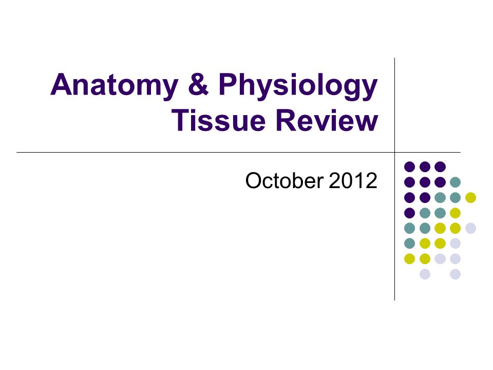 Anatomy & Physiology Tissue Review - ppt video online download