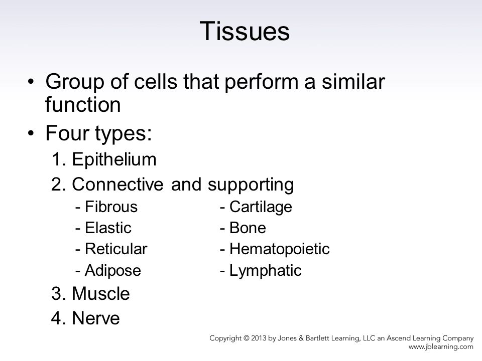 A Group Of Cells That Perform Similar Functions 114