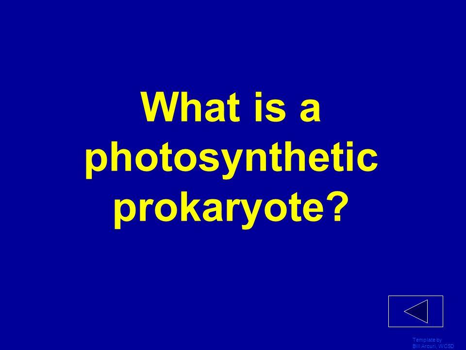 What is a photosynthetic prokaryote