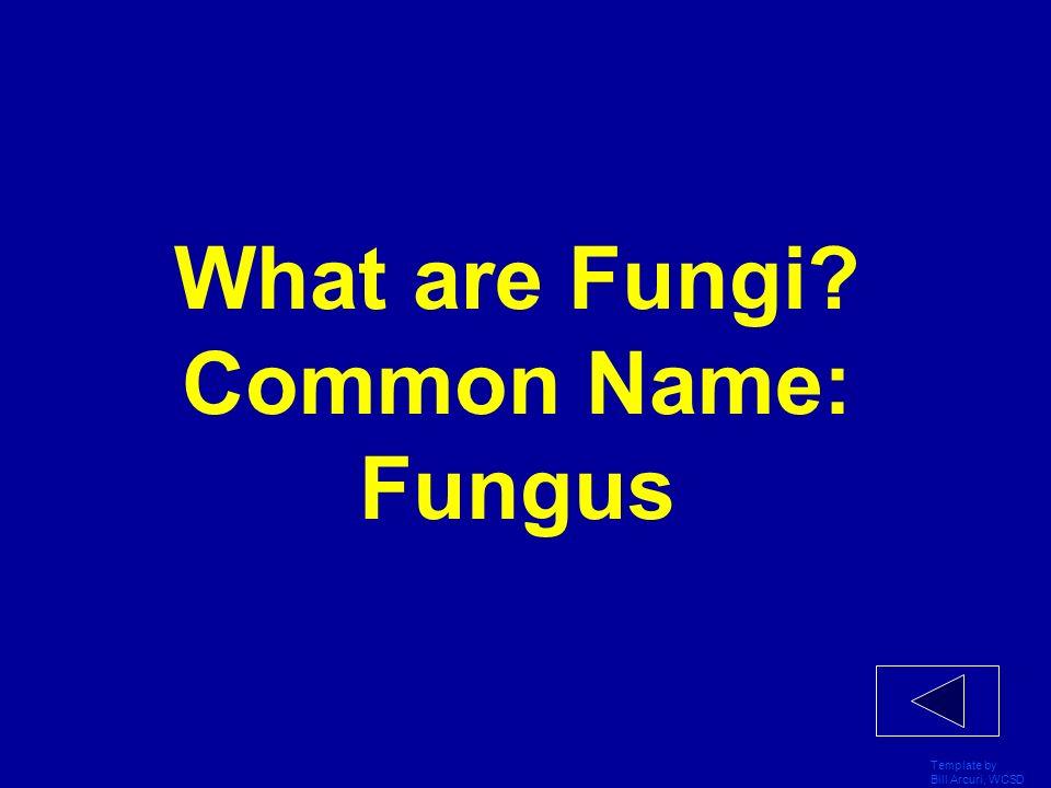 What are Fungi Common Name: Fungus