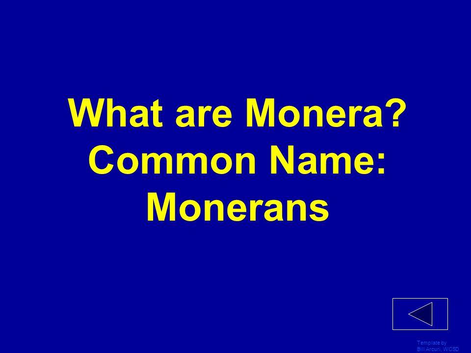 What are Monera Common Name: Monerans