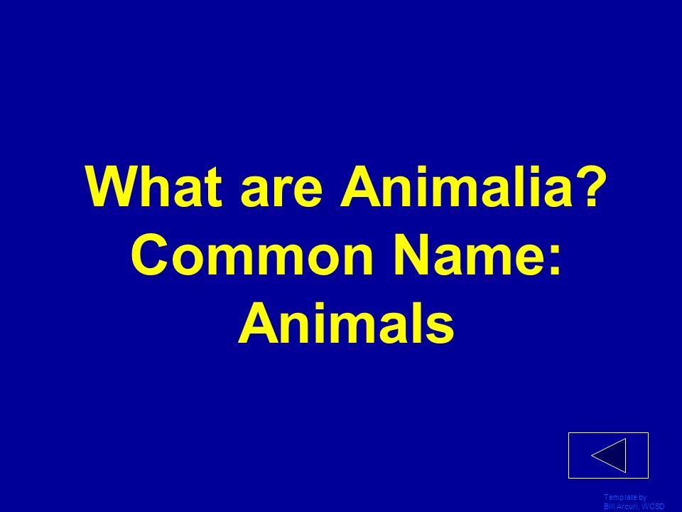 What are Animalia Common Name: Animals