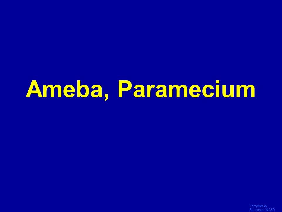 Ameba, Paramecium Template by Bill Arcuri, WCSD