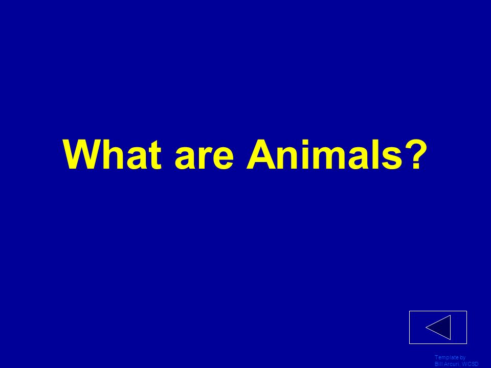 What are Animals Template by Bill Arcuri, WCSD