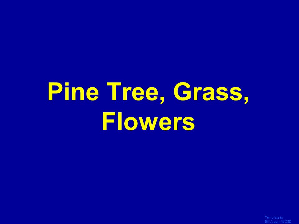Pine Tree, Grass, Flowers