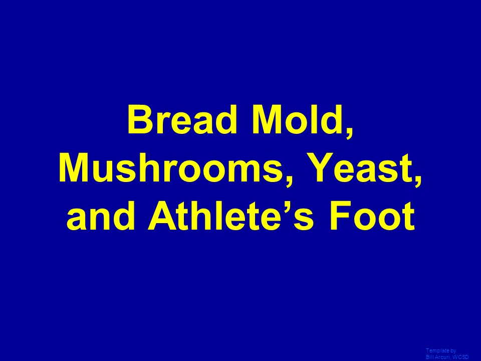 Bread Mold, Mushrooms, Yeast, and Athlete's Foot