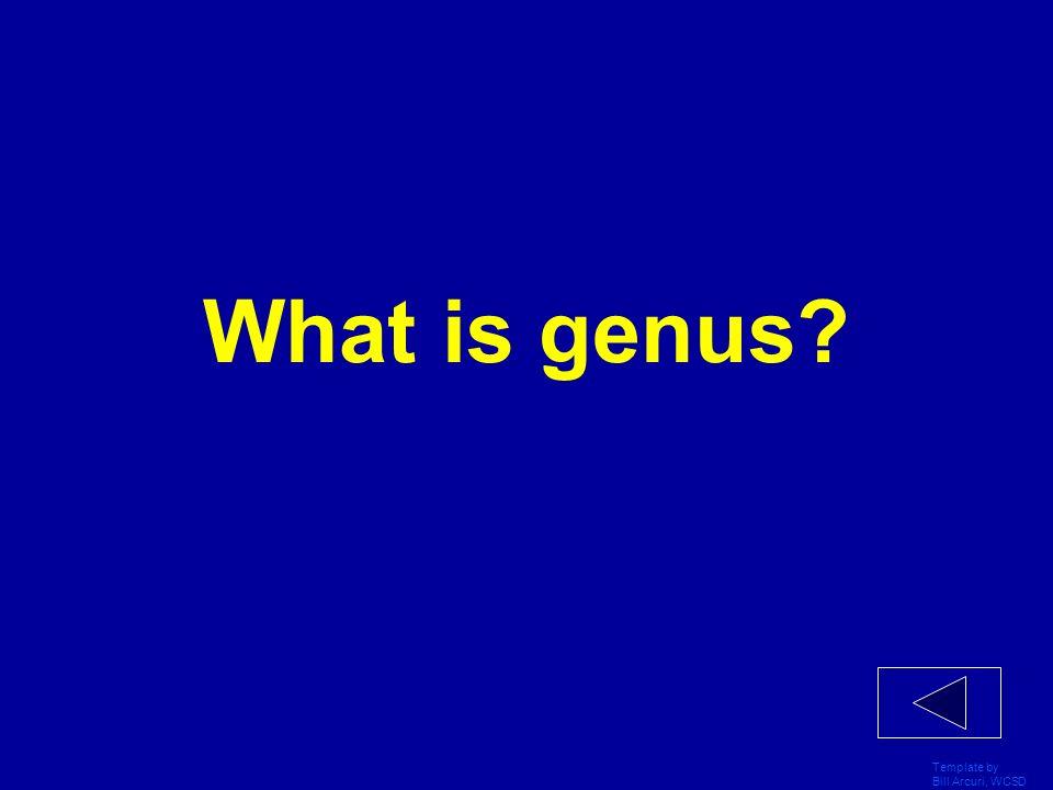 What is genus Template by Bill Arcuri, WCSD