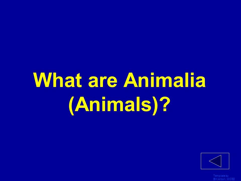 What are Animalia (Animals)