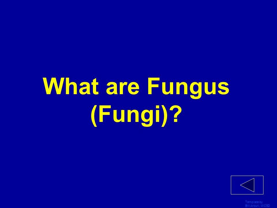 What are Fungus (Fungi)